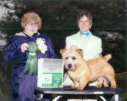 Glen of Imaal Terrier, Scoobie gets Best Puppy and Reserve Winners dog at 4.5 months