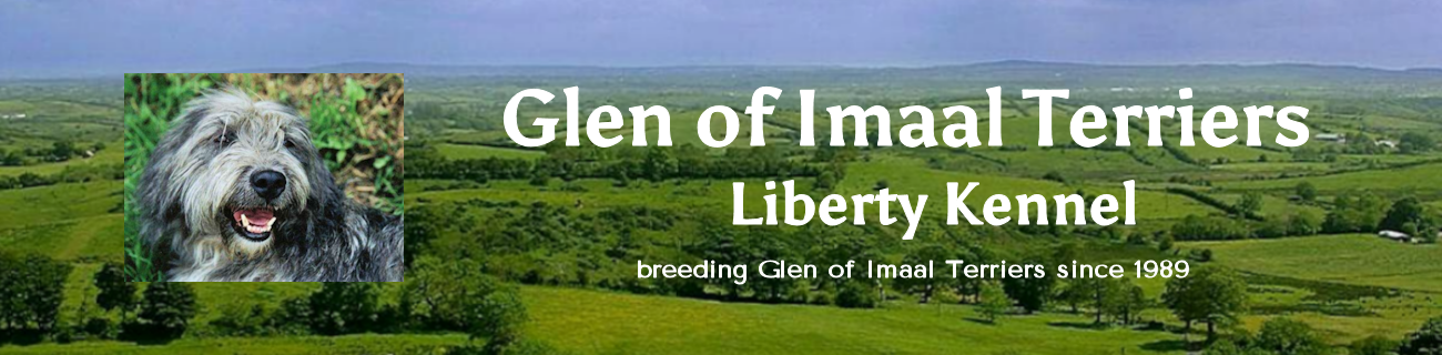 Glen of Imaal Terriers