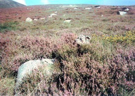 Glen in heather
