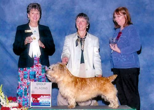 Champion Glen of Imaal Terrier