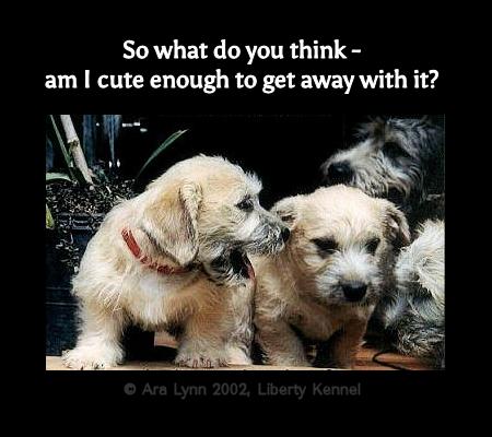 Puppy Conspiracy