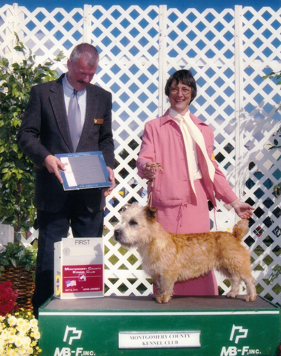 Glen of Imaal Terrier, Scoobie wins Best Miscellaneous Dog in a field of 12 dogs, at 10.5 months
