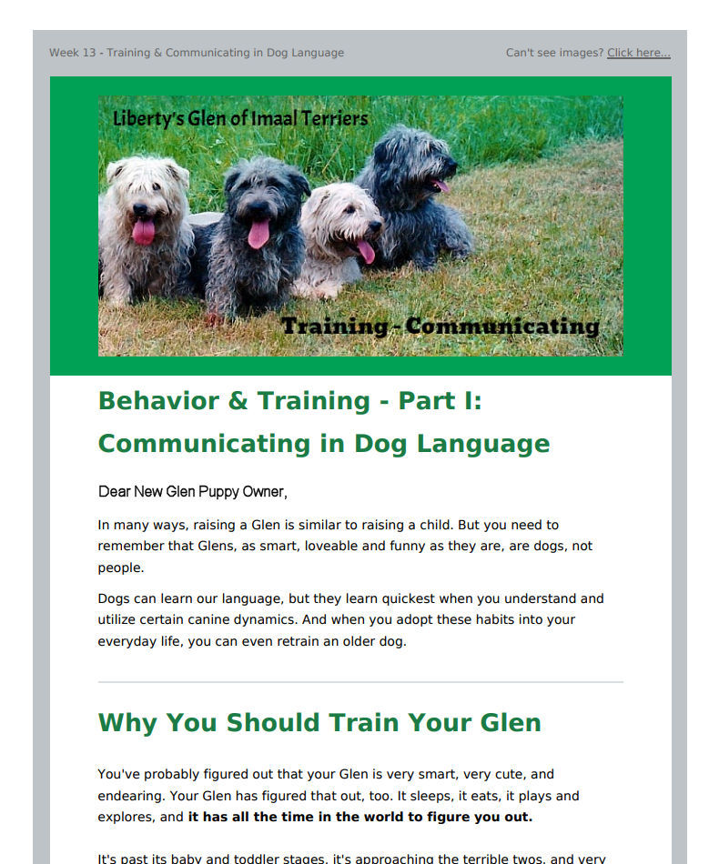 Detailed Irish Glen of Imaal Terrier Care Information email preview